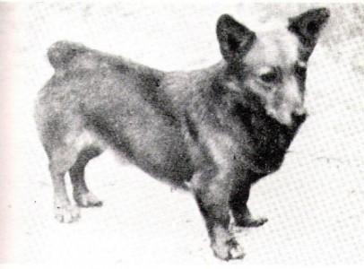 Bowhit Pepper, 1926