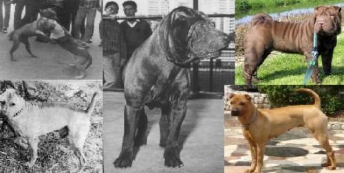 šarpėjų evoliucija
