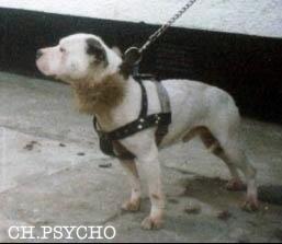 Psycho prieš kovą su Stormer